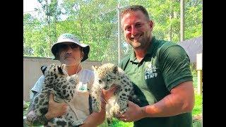 Animal Adventures with Jordan: Snow Leopard