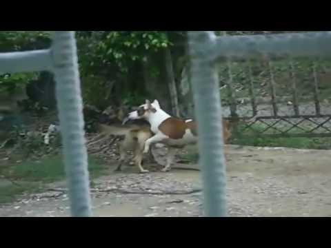 Xxx Mp4 Animal Sex Dog Mating The Animal World 3gp Sex