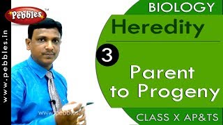 Parent to Progeny : Heredity | Biology | Science |  Class 10