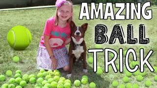 Smartest Dog in the World!!!  Super Amazing Dog Ball Trick!