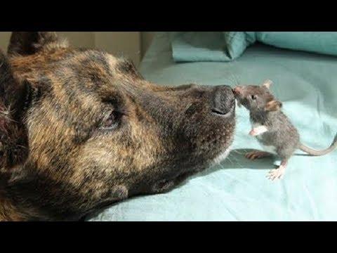 This dog was depressed until he met an unusual friend