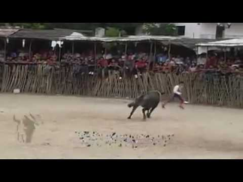 Xxx Mp4 Un Recuerdo Del Famoso Toro El Rayito Rancho El Mirador De Sotuta 3gp Sex