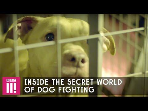 Professor Green | Inside The Secret World Of Dog Fighting