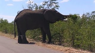 Moçambique: o que fazer quando os elefantes comem todo o canho? - science