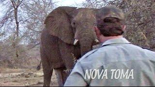 African Big Game Hunting NOVATOMA