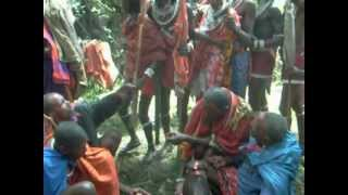 Blood drinking out of a throat by young brave teenage Maasai.