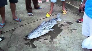 Encontrado morto no lago em Gandu!