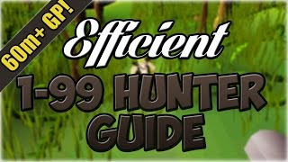 Oldschool Runescape EFFICIENT 1-99 Hunter Guide | 60M+ Profit! (In-Depth Black Chins Guide at 10:14)