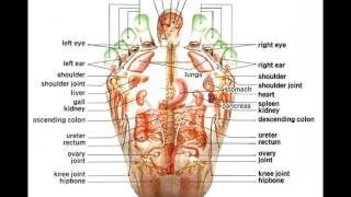 Foot Reflexology Map for Beginners (19)