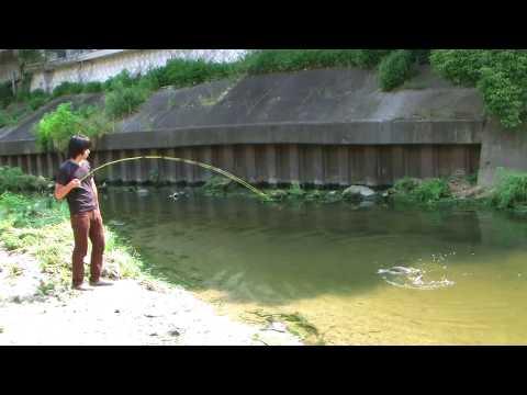 鯉のフライフィッシング carp on the fly fishing JVC GZ HD7