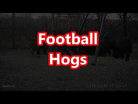 Xxx Mp4 Football Hogs 3gp Sex
