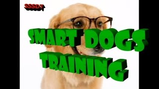 How to train your dog in Hindi : dog training in hindi