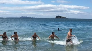 Swimmers at Coromandel Beach, NZ Run Out of Water as Orcas Come Close to Shore