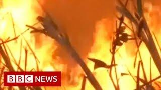 Amazon fires: Brazil's president v conservationists - BBC News