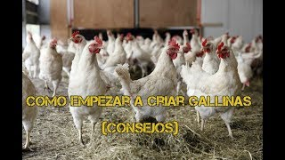 Como empezar a criar gallinas ponedoras - Luis Alberto 2018