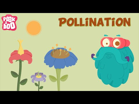 Parts of a flower and Pollination The Dr. Binocs Show Learn Videos For Kids