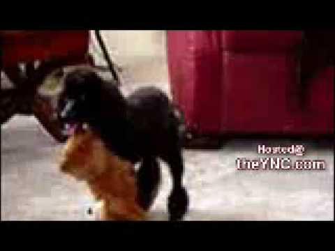 Xxx Mp4 Horny Dog 3gp Sex