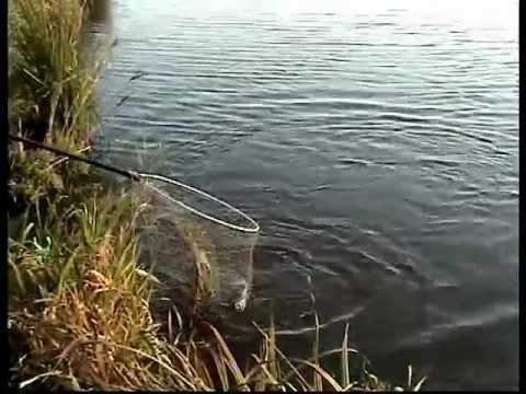 платники рыбалка иваново