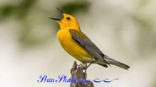 Pran pakhi re (প্রাণ পাখি রে.. তুই উড়াল দিয়া কই গেলি রে..)