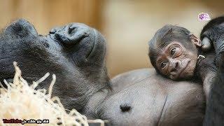 أفضل 10 أباء في عالم الحيوان  | أروع أمثلة التضحية !