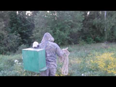 видео ловля бродячих роев в лесу