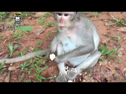 Male monkey do wrong on female monkey and angry with her