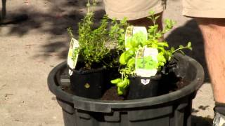 How To Plant Seedlings - DIY At Bunnings
