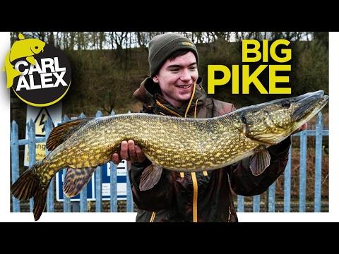 Pike Fishing ADVENTURE