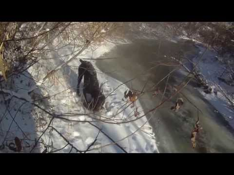 Ловушка из снега на фазана
