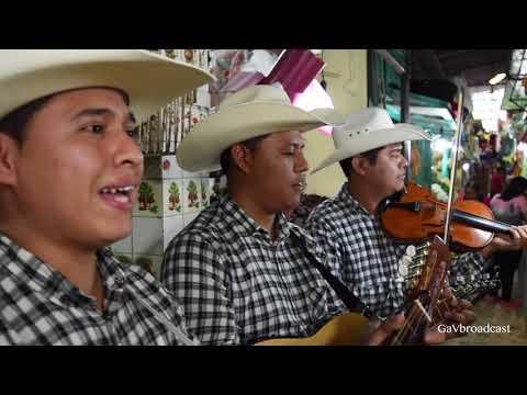 Puros Huapangos Huastecos con el Trío Valle Dorado de Álamo Veracruz