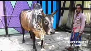 KALA SHANTI  Sylheti Bisal (2015) Gulapgonj