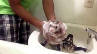 HARU's Bath Time (08.13.2013)