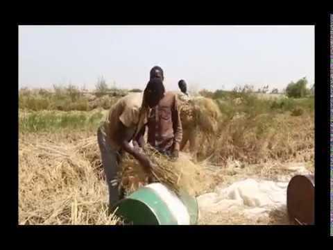 NTA Hausa: Aiyukan Noma Na Gwamnatin Tarayyar Nageriya