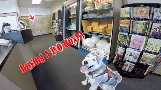 Buying a P.O BOX, Excited Siberian Husky Inside UPS Store !
