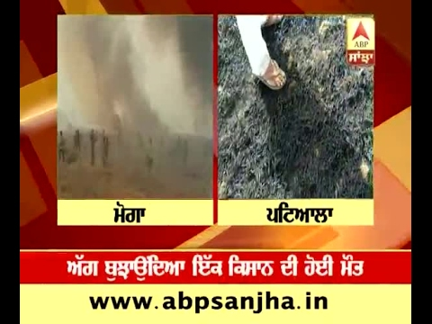 500 acres of wheat crop burnt in fire at Moga and Patiala