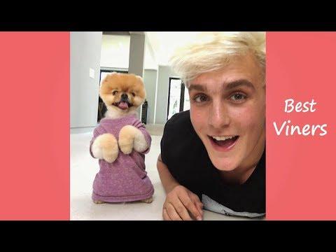 Jake Paul Vine compilation Funny Jake Paul Vines & Instagram Videos Best Viners