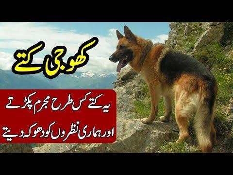 REALITY BEHIND SEARHC DOGS | KHOJI KUTTE | KHOJI TV