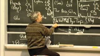 Proteins, levels of Structure, Non-covalent Forces, excerpt 2 | MIT 7.01SC Fundamentals of Biology