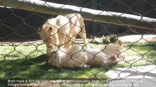 10 More Weird Animal Sex & Mating Habits Insane Sexual Behavior: Lion, Hyena, Dolphin, Panda Dolphin