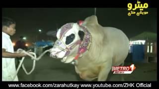 Cow Mandi   2016   Maweshi Mandi   Metro Karachi   Sohrab Goth Gai Mandi   EP 2