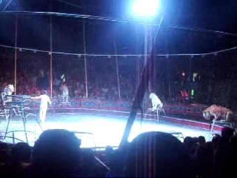 Circo Hermanos Valentinos 1 de 13