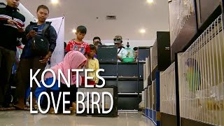 NET JATENG -  KONTES LOVE BIRD SEMARANG