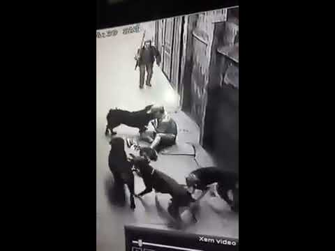 Two Rottweiler attack human, in VietNam