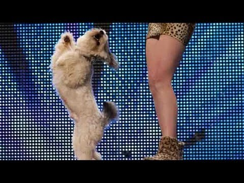 Xxx Mp4 Ashleigh And Pudsey Britain S Got Talent 2012 Audition UK Version 3gp Sex