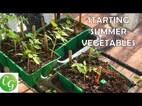 Xxx Mp4 Starting Summer Vegetables A Complete Guide To Starting Vegetable Seeds Tomatoes Peppers Etc 3gp Sex