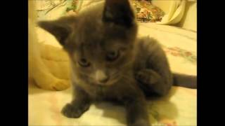 (((Ready for laugh))))   cute kitten and cats scare from things compilation