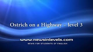 Ostrich on a Highway – level 3