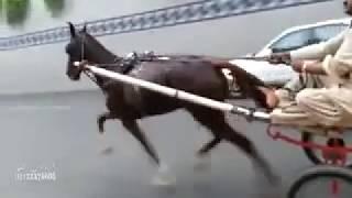 Queen of pakistan(Naseeba Wali Lahore)