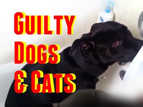 Guilty Dogs & Cats The Best of Guilty Dogs and Cats Compilation 2014 2015