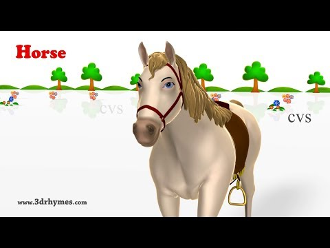 Learn Animals Song  - 3D Animation Animals Video for Kids